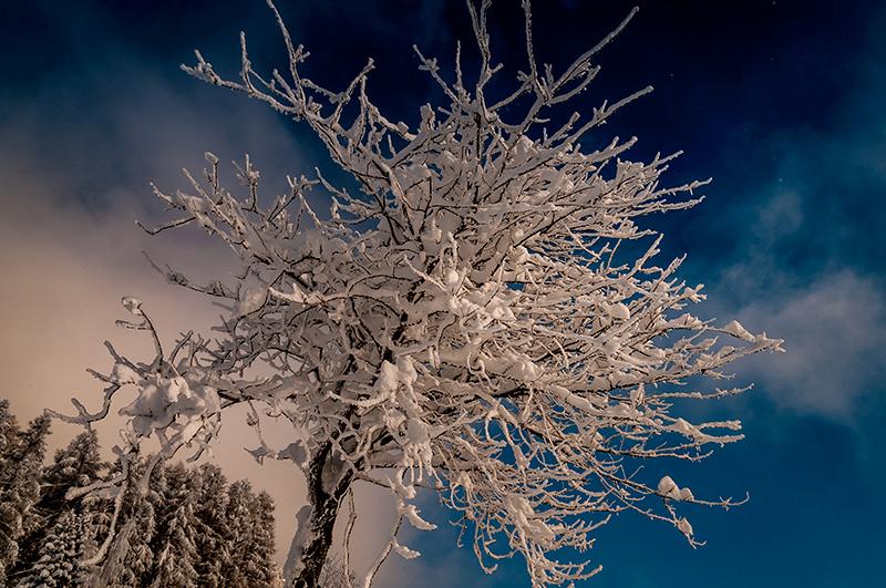 Winter im Goms