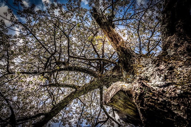 Frühling im Goms